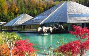 Picture trees, landscape, nature, lake, Austria, sculpture, Salzburg, pavilions, Fuschlsee, Fuschlsee
