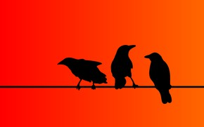 Picture birds, background, color