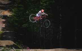 Picture forest, flowers, track, cyclist, the trick