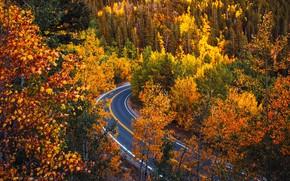 Picture road, autumn, forest, trees, Colorado, Colorado
