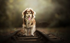 Picture each, dog, railroad