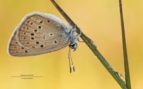 Picture macro, droplets, Rosa, background, butterfly, a blade of grass