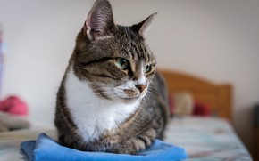 Picture cat, look, pose