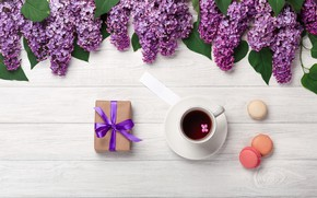Picture flowers, flowers, lilac, romantic, coffee cup, spring, purple, macarons, lilac, a Cup of coffee, macaroon