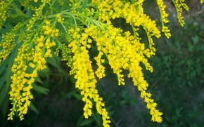 Picture macro, flowers, yellow, Meduzanol ©