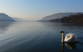 Picture white, water, light, mountains, nature, fog, hills, bird, shore, morning, Swan, pond, swimming, lonely