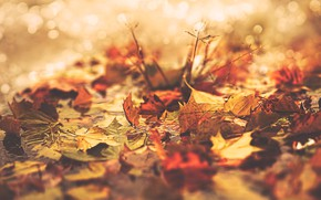 Picture autumn, leaves, water, light, branches, nature, background, stems, foliage, yellow, orange, Sunny, a lot, lie, …