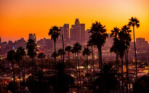 Picture city, sunset, California, palm trees, los angeles, buildings, skyscrapers