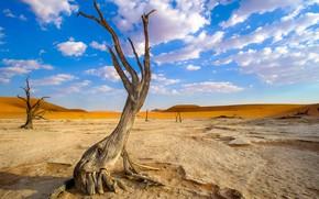Picture tree, desert, Namibia, Deadvlei