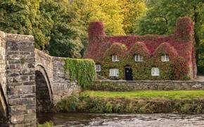 Picture autumn, trees, bridge, house, river, the building, England, England, Wales, Wales, Llanrwst Bridge, Century Cistercian …