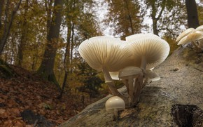 Picture autumn, forest, mushrooms, family