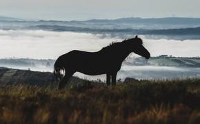 Picture nature, fog, horse