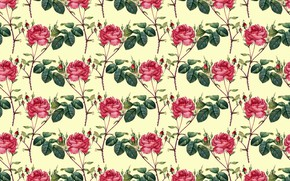 Picture background, Wallpaper, roses, texture, buds