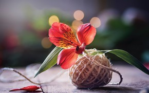 Picture flower, background, thread