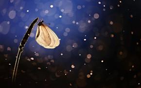 Picture butterfly, butterfly, a blade of grass, bokeh, bokeh, blade of grass