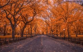 Picture autumn, trees, Park, foliage, New York, the evening, John S