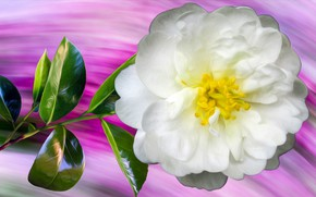 Picture Graphics, Flower, White, Briar