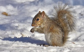 Picture winter, look, light, snow, pose, shadow, protein, muzzle, profile, sitting