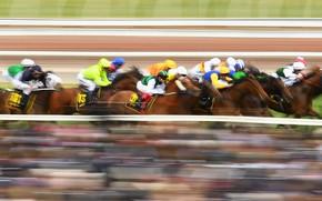 Picture horse, Australia, jump, horse riding, Racecourse, Flemington Racecourse