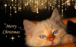 Picture look, lights, the dark background, kitty, Shine, new year, Christmas, kitty, congratulations, postcard, design