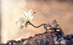 Picture flower, macro, stones, Daisy, jar