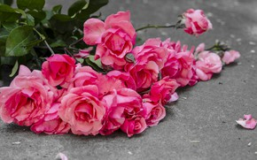Picture flowers, roses, pink, buds, pink, flowers, romantic, petals, roses