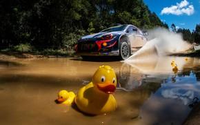 Picture Australia, duck, Neville, Hyundai i20 WRC, wrc 2018