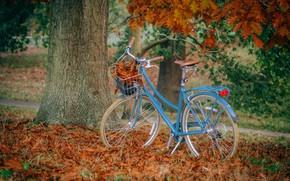 Picture autumn, leaves, blue, nature, bike, Park, tree, branch, basket, falling leaves, path, oak, the pile …