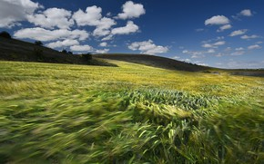 Picture field, the sky, clouds, blue, the wind, hills, blur, ears