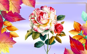 Picture Roza, Graphics, Flowers