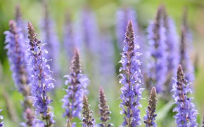 Picture flowers, tenderness, lavender