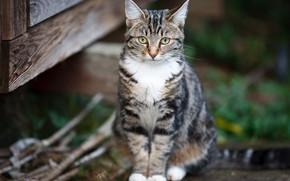Picture cat, cat, kitty, Board, kitty, sitting, bokeh
