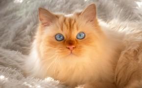Picture cat, cat, light, fur