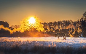 Picture sunset, nature, horse