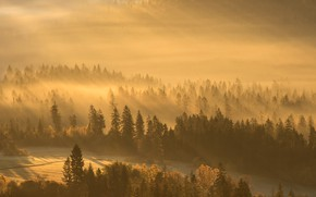 Picture Fog, Forest, Light
