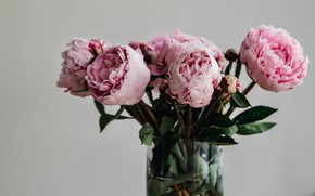 Picture flowers, bouquet, vase, pink, peonies, in a vase