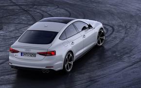 Picture Audi, back, Audi A5, 2019, S5 Sportback