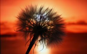 Picture sunset, background, dandelion, fluff