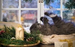 Picture winter, cat, cat, look, branches, pose, comfort, house, kitty, table, grey, holiday, gift, the game, …