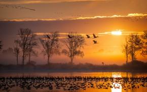 Picture the sun, clouds, light, trees, flight, landscape, sunset, birds, nature, fog, river, shore, pack, the …