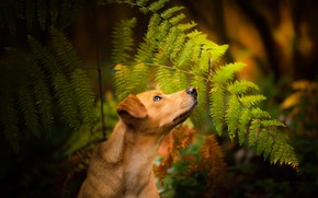 Picture forest, dog, fern