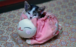 Picture cat, kitty, pink, legs, baby, muzzle, handbag, kitty, bag, kitty, spotted, pouch