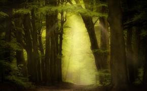 Picture greens, forest, summer, leaves, rays, trees, branches, fog, path