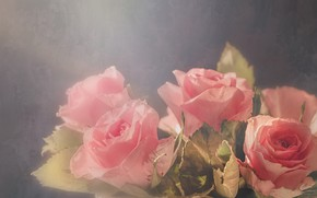 Picture light, background, roses, pot