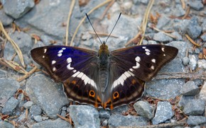 Picture macro, brown, background, wings, dark, butterfly, plant, insect, pattern, stones