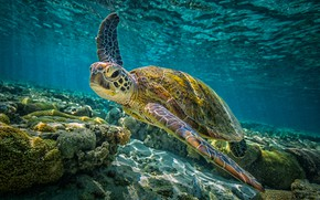 Picture underwater, sea, sea turtle