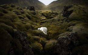 Picture nature, mountain, dog