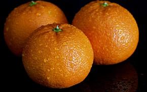 Picture background, oranges, fruit
