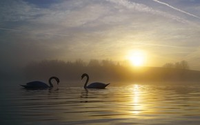 Picture forest, the sky, water, the sun, clouds, light, landscape, birds, fog, lake, pond, dawn, shore, …