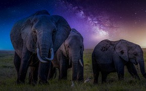 Picture stars, ears, the milky way, elephants, trunks